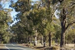 An example of what the proposed VicRoads plans will look like on Tatura-Rushworth road. This is not to scale in terms of the exact road widening measurements or proposed clearance for road shoulders, however, it will give you a very clear example of how damaging the works will be to our roadside vegetation.