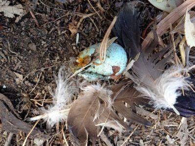 Photo of smashed egg