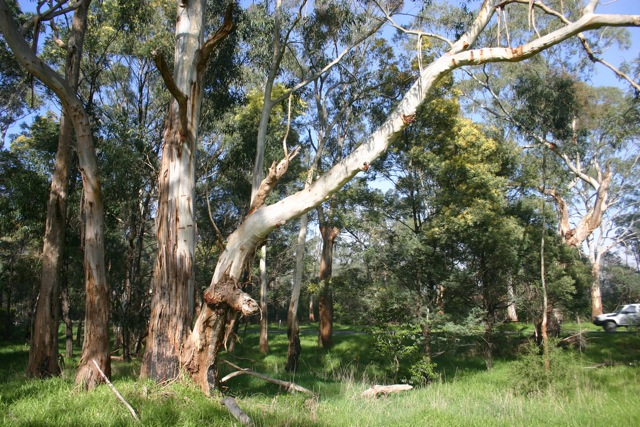tyers-trees006