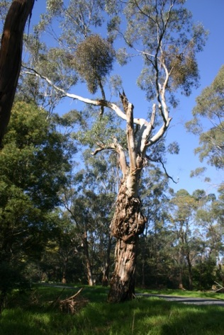 tyers-trees007